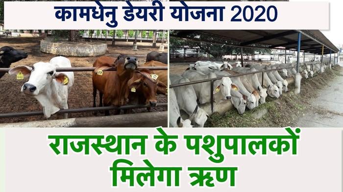 Kamdhenu Dairy Yojana Rajasthan