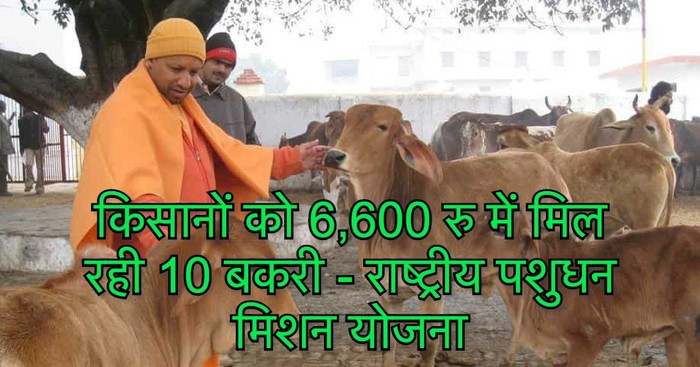 Under National Livestock Mission Farmer Will Get 10 Goats For 6000 Rupees Goat Farming Scheme